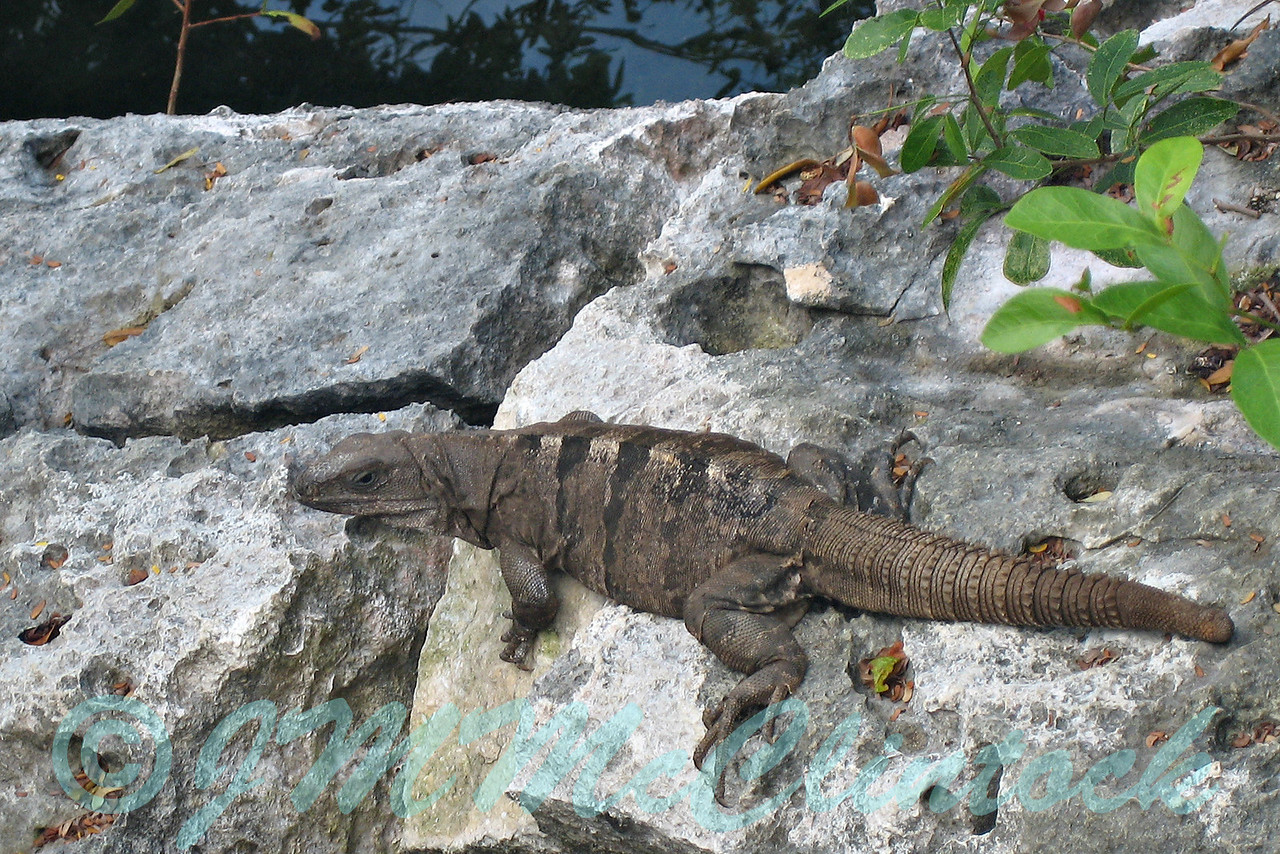 Wildlife at Xel-Ha