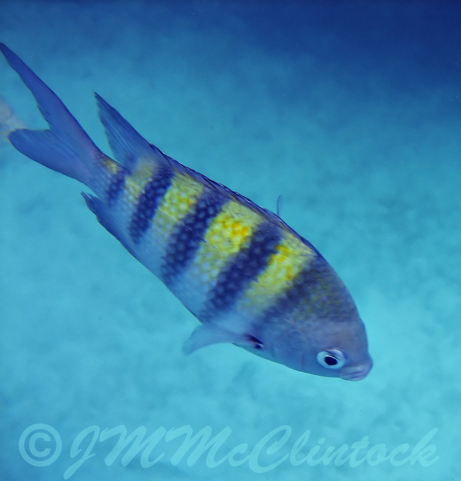 A tropical fish at Xel-Ha.  This was my first time shooting underwater shots while snorkeling.