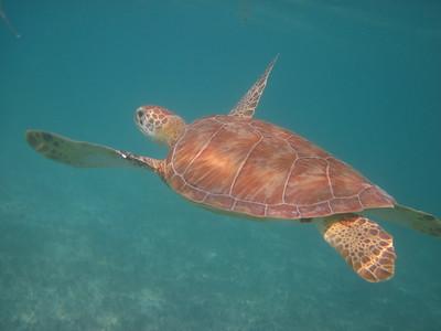 riviera maya highlights