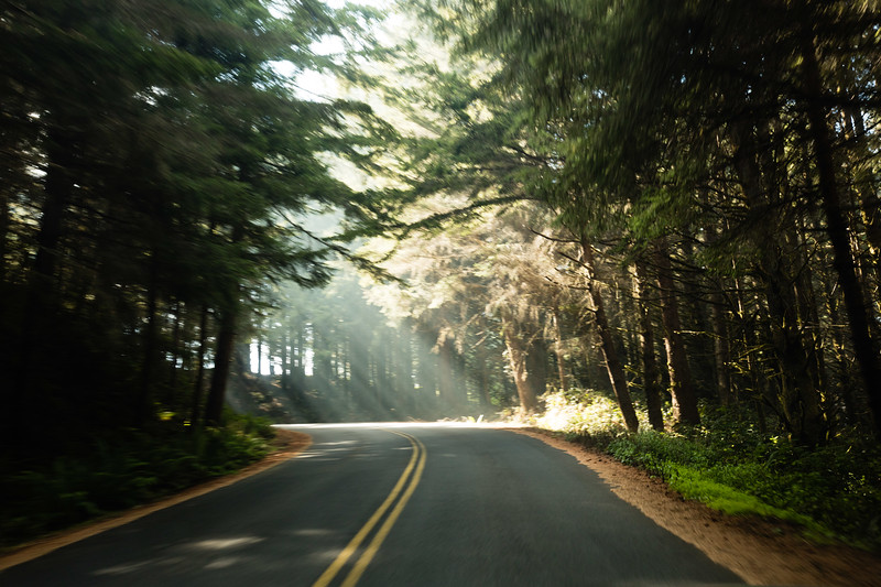 Sunlit Forest Road