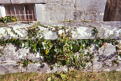 castle wall with ivy