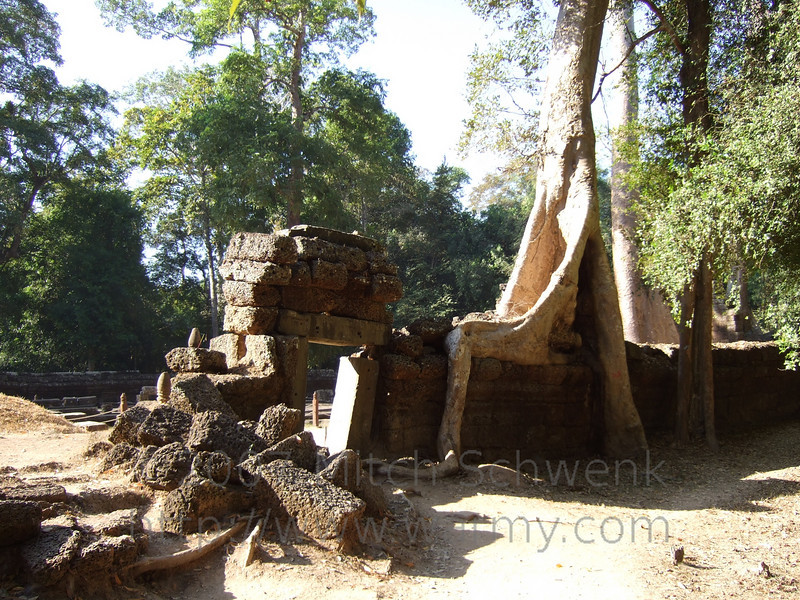 The tree roots of Ta Prohm.