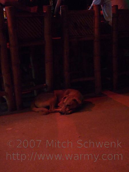 A dog sleeps next to the bar near the beach.