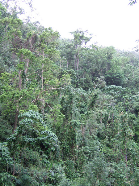 The forest around Tamaraw Falls.