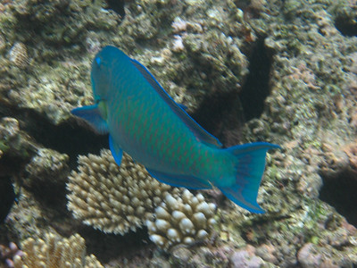 Great Barrier Reef Snorkelling Expedition (Cairns)