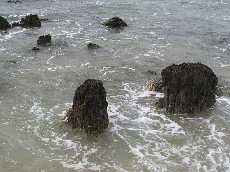 These looked like tree stumps but its old coral close to the shore.