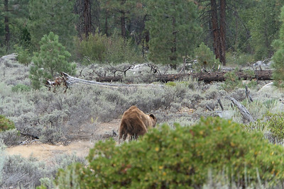 One of the two bears we saw towards the end of the day