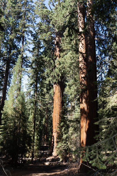 A warm-up day hike through the big trees