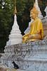 Chiang Mai - Buddha and his dog