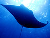 Similan islands - Manta ray