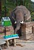 A hungry elephant.