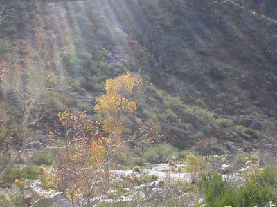 Sabino Canyon - Tucson