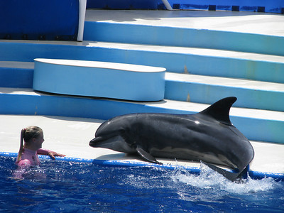 This dolphins were gorgeous and big!