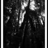 Muriwoods2