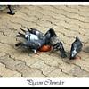 PigeonChowder