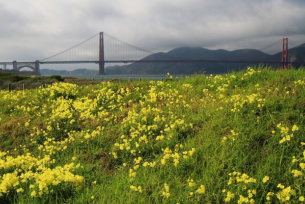 San Francisco weekend Feb 21-22nd, 2015