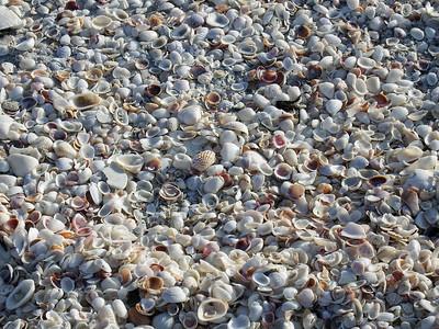 Shells, shells, shells