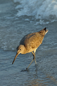 willet? won't it?