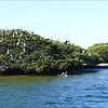 Video: Pelican Rescue on our Breakfast Cruise - Tarpon Bay Explorers