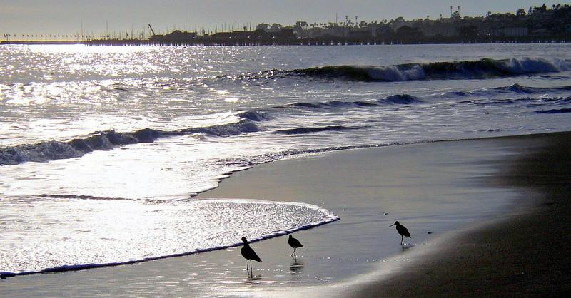 Sandpipers in late afternoon with Stearns Wharf in the distance