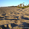 2.22.11<br /> <br /> sand and shadows...