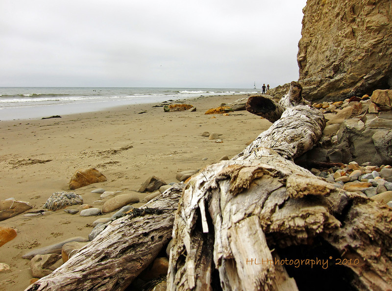 Some driftwood on the beach below Shoreline Park