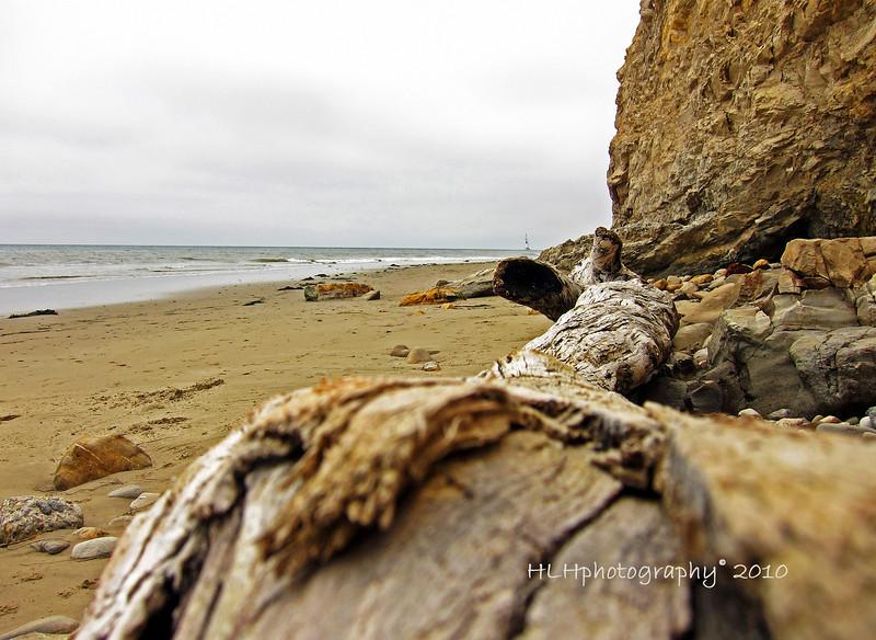 Some driftwood on the beach below Shoreline Park