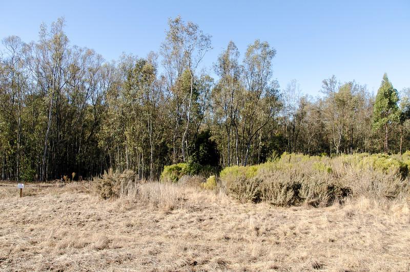 Coronado Butterfly Preserve in Goleta.
