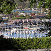 Marina in Tiburon, seen from the hills