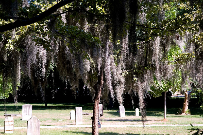 An historic cemetery - Spanish moss