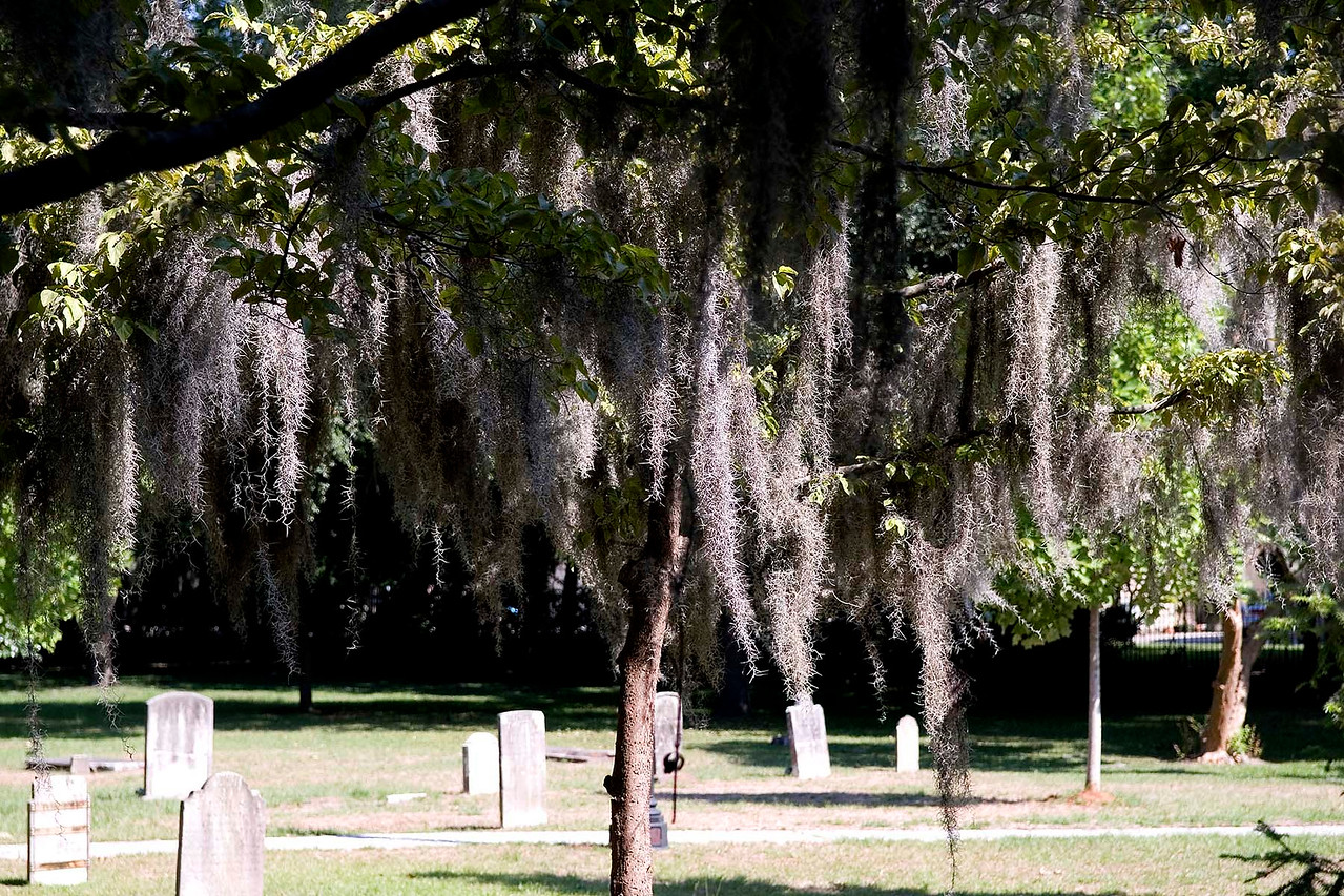 An historic cemetery - Spanish moss