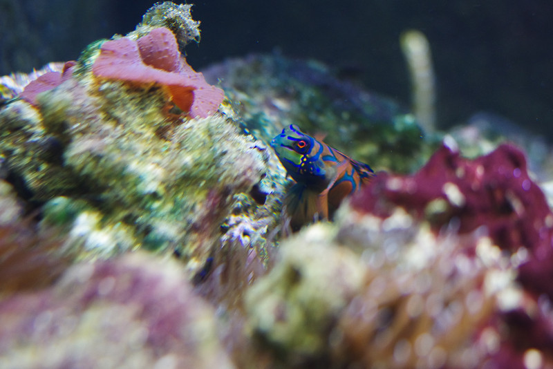 Joli petit poisson multicolore