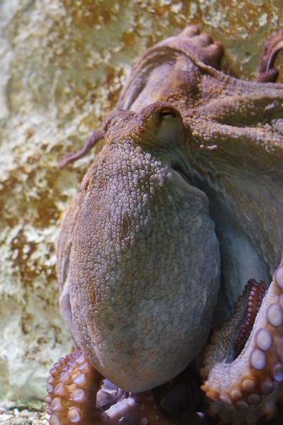 Monsieur le poulpe