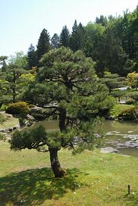 More Japanese garden