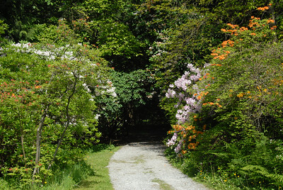 Rhododendron Way in the gardens in Mount Washinton park