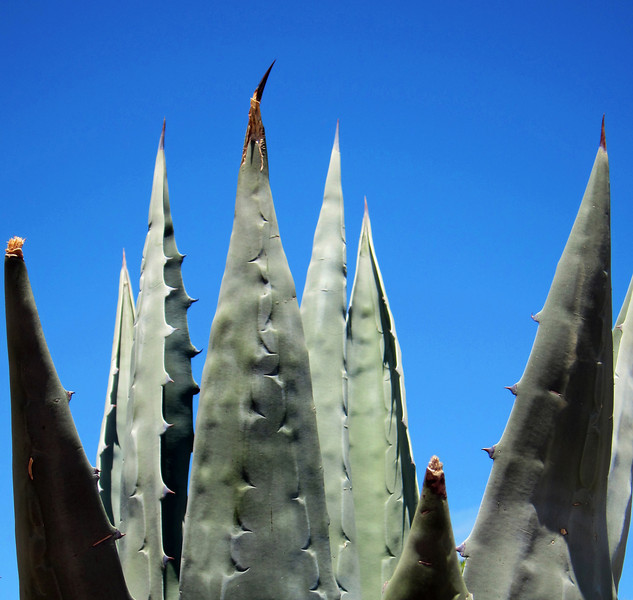 Arizona - August 2010