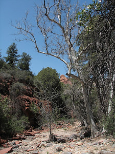 Spring Break April 2007 56 of 190