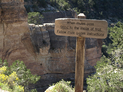 On the mule trail at Bright Angel of the Grand Canyon
