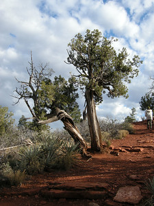 Many very individualistic trees are in the area.
