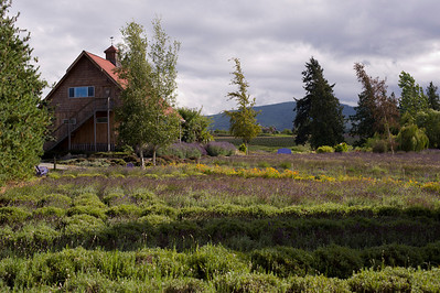 The Purple Haze lavender farm.  (Where we stayed in Sequim.)