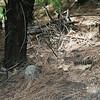Rattlesnake along the trail!