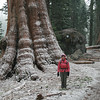 Anne beside a snow covered sequoia taken on May 22!