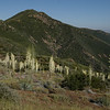Wilderness Los Padres National Forest