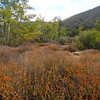 Matilija Wilderness Los Padres National Forest