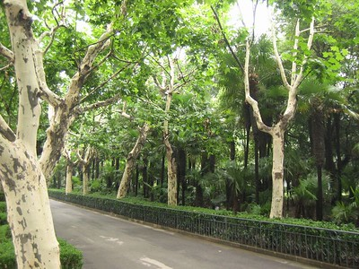 Another park -- this one an old famous one: Fuxing Park, established 1909.