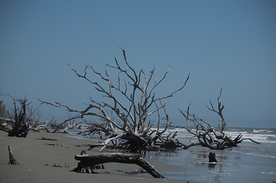 Boneyard Beach Landscape