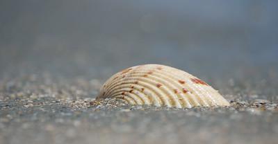 Seashell by the seshore