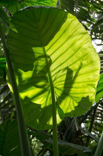 Oahu March 2013