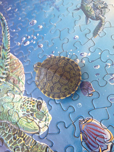 E.J. the turtle is puzzled