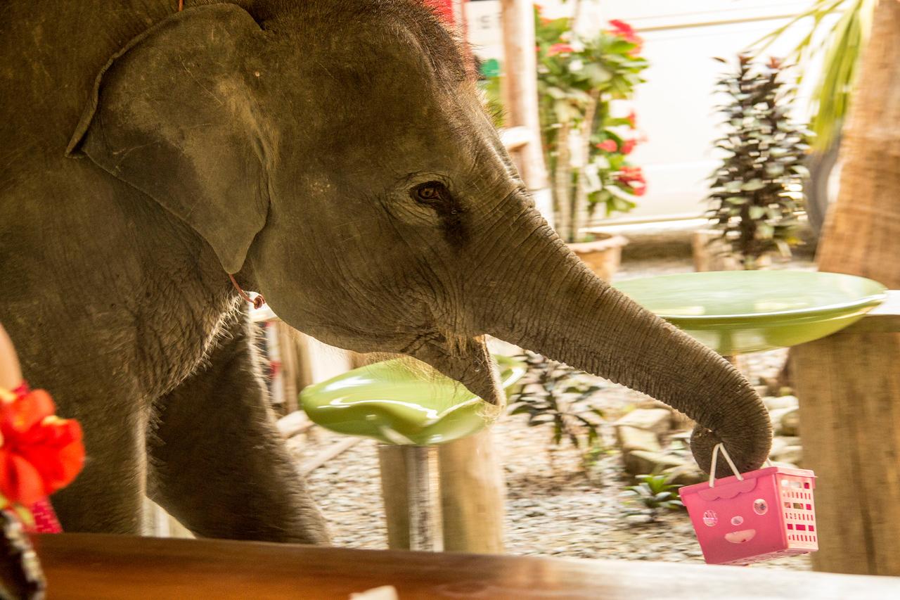 Thailand  Khao Sok Elephant Camp